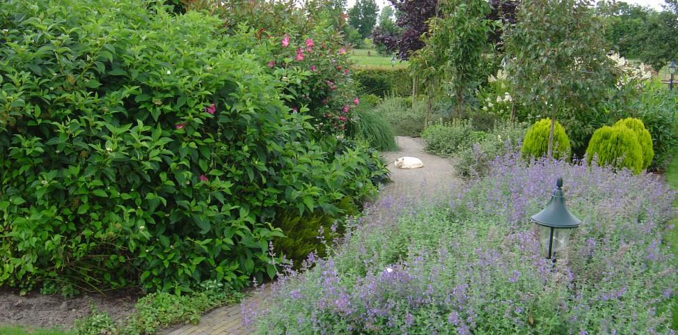 Onderhoud gazon tuin